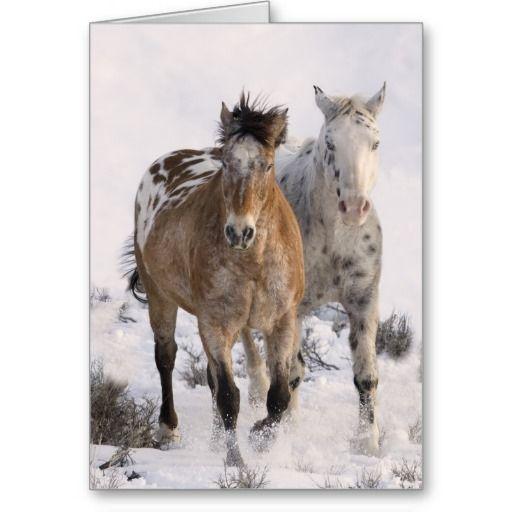 Two Appaloosas Horse Greeting Card by Carol Walker http://www.zazzle.com/savewildhorses?
