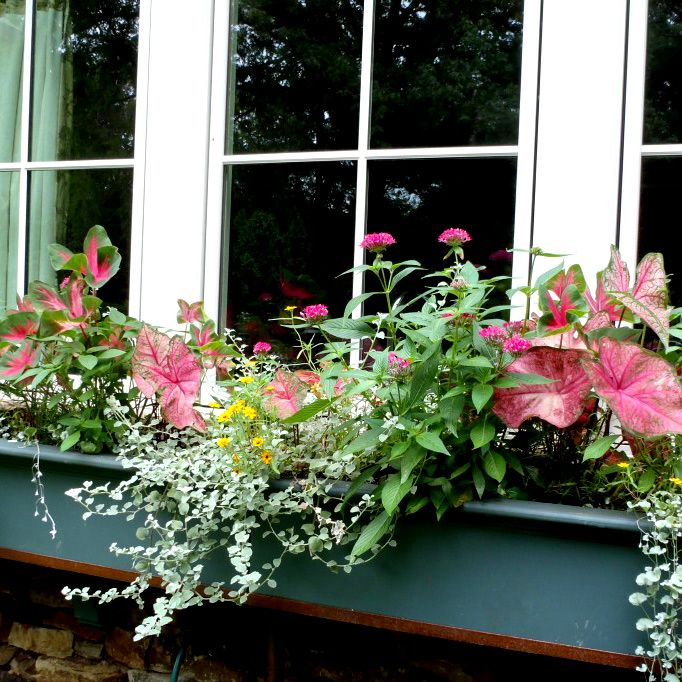 Exploring Variegated Plants for Containers   WindowBox.com #Gardening Blog