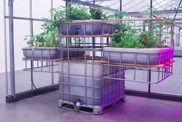 aquaponics farm installation: