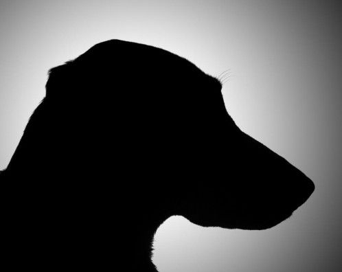 El Código Civil reconocerá que todos los animales son seres vivos con sensibilidad