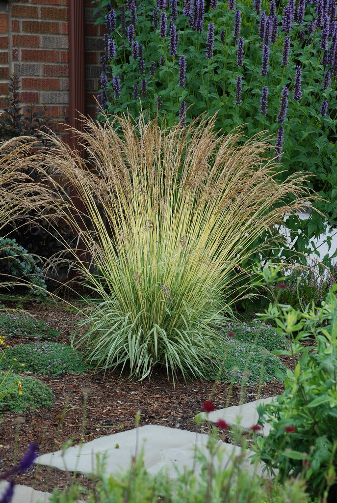 1188 best images about ornamental grasses on pinterest for Ornamental grass design