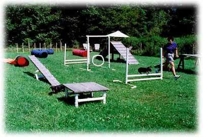 backyard dog agility courses | Dog training, training for dogs, agility training