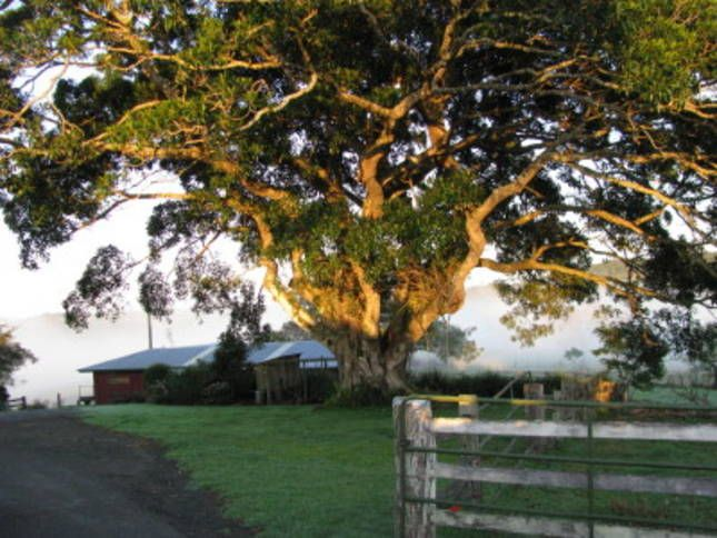 Arley Farm, The Old Dairy, a Maleny Self-contained, farmstay | Stayz