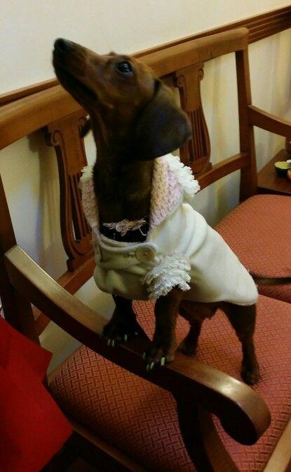 Elegante e spiritosa  velluto -  interno.... (scampolo) tessuto  Chanel