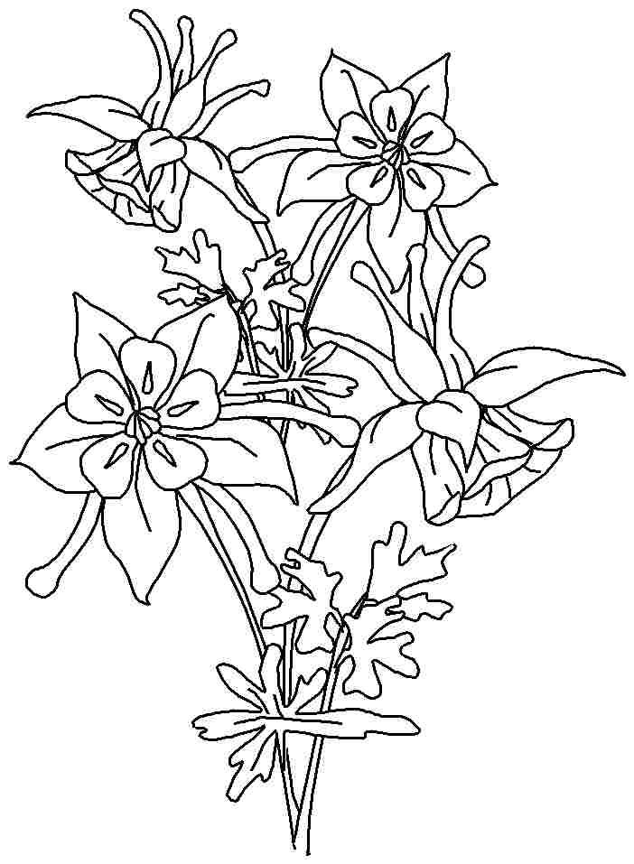 Columbine Flower Line Drawing : Printable coloring pages columbine flowers for girls