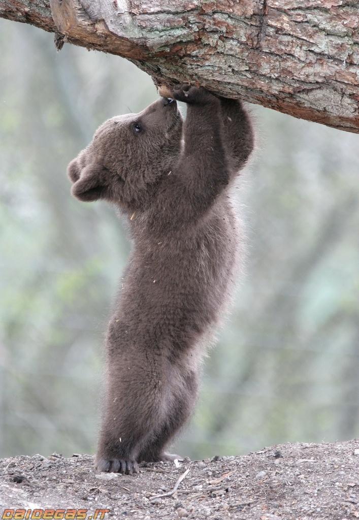 6200 best Coisinhas Lindas images on Pinterest   Wild ...