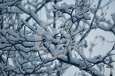 Tree surrounded by snow in winter.
