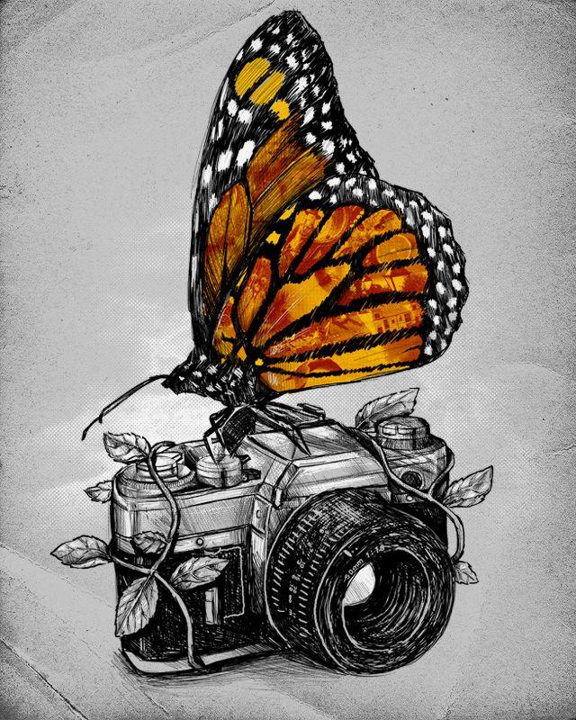 Borboleta. Animais. Câmera fotográfica. Desenho. Arte. Preto e branco.