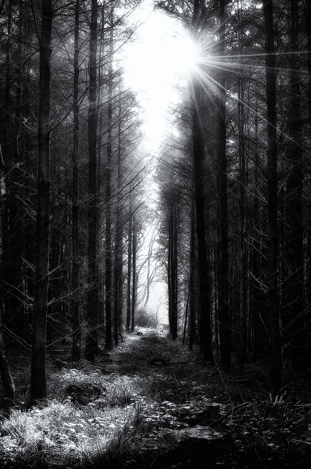 landscapes black and white aesthetic black and white