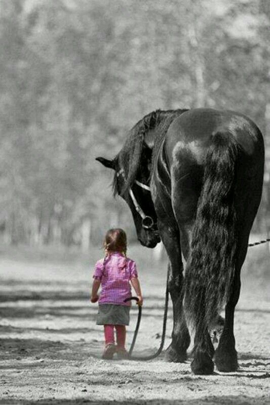 Touching picture. Little girl and beautiful horse