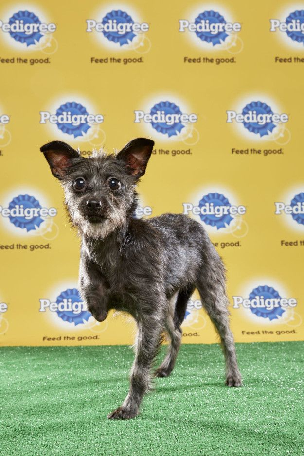 And Lucky, who's got three legs and one killer game face. | The Puppy Bowl Will Feature Three Special-Needs Dogs This Year