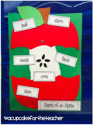 Kindergarten- Use this board to teach the students about the parts of the apple. The great thing about this board is that the students can interact with it while learning and they can also create their own apple model with labels. :)