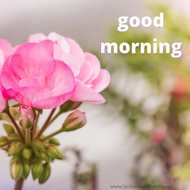 Good Morning Wishes With Beautiful Flowers Images : Best images about good morning or is it night
