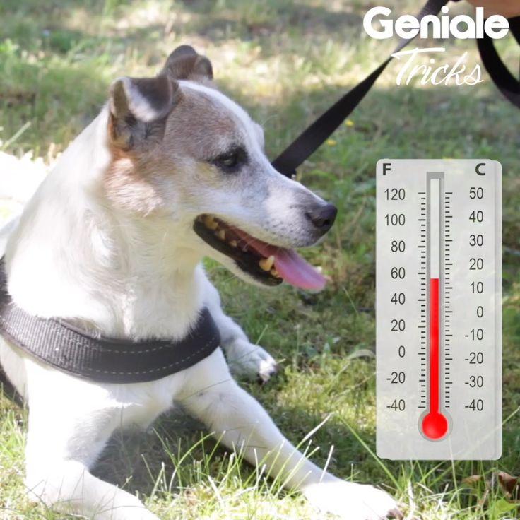 Eis für Hunde   – Haustiere – Tipps & Tricks
