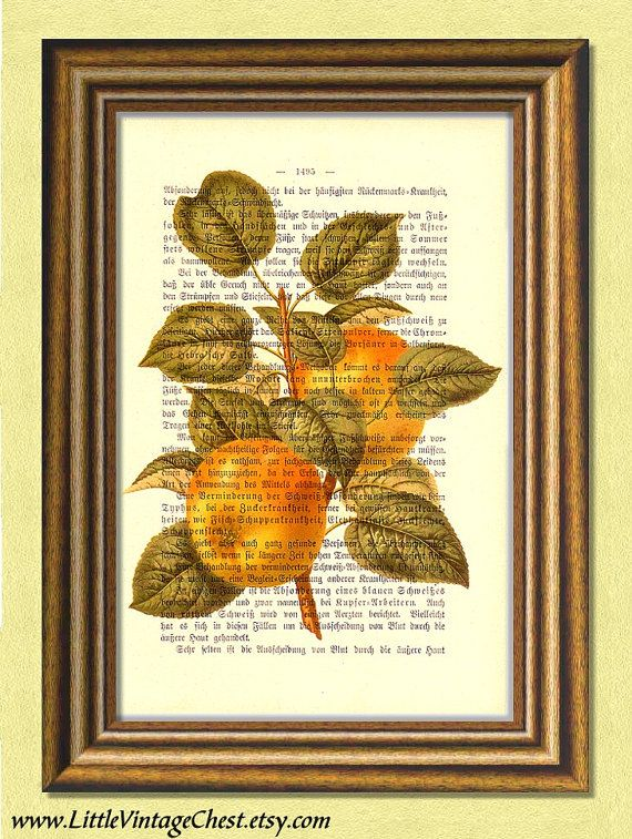 GOLDEN APPLES  Dictionary art print  Vintage by littlevintagechest