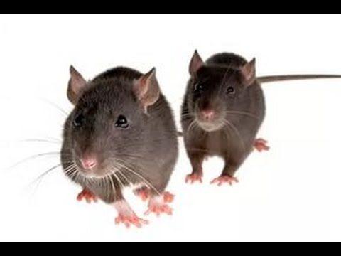 Как избавиться от мышей, фантастика! - YouTube