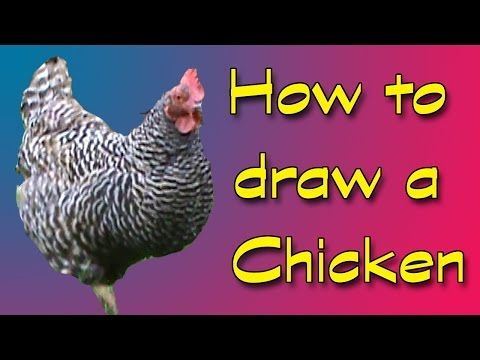 ▶ How to draw a chicken plus a question! - YouTube