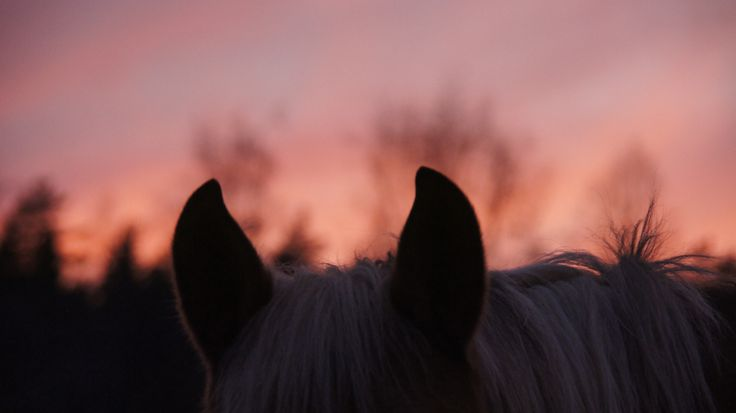 #art of one of our horses!