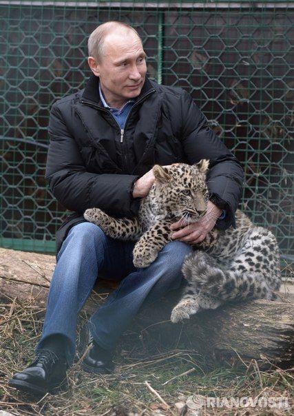 Президент России Владимир Путин в Центре разведения и реабилитации леопарда в Сочи. © РИА Новости , Алексей Никольский