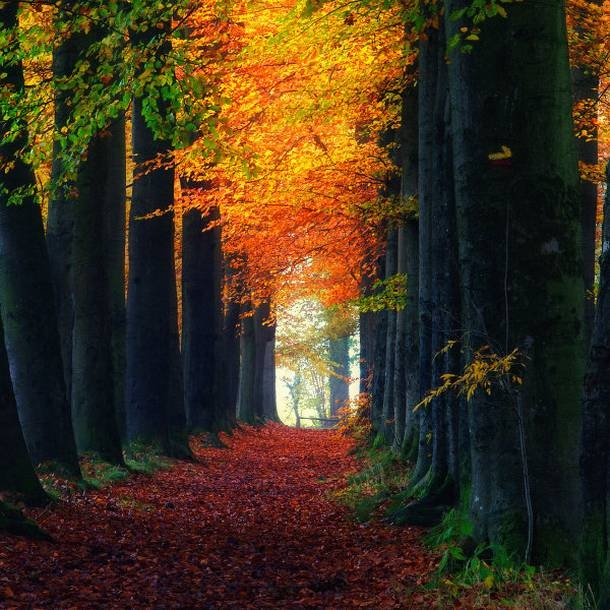 path: Stunning Photography, Walks, Paths, Autumn Leaves, Colors, Trees, Nature Photography, Places, Landscapes Photography