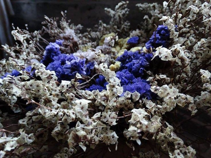 blue and grey flowers
