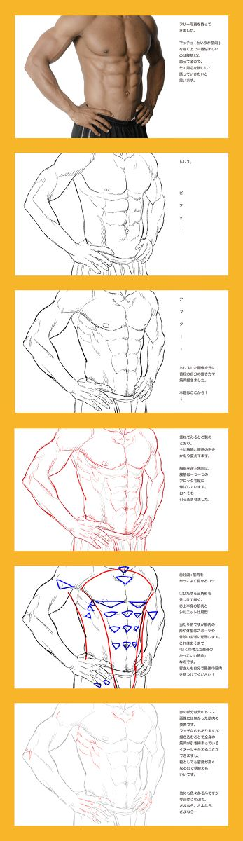 Muscles                                                                                                                                                     More