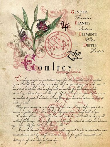 "Comfrey page The Magickal Uses of Comfrey Planetary Association: Saturn Deity Association: Hecate Element: Water Histpry and Folklore: Comfrey has been cultivated for healing since 400 BCE. It was used by such notable Greek physicians as Herodotus, Nicander, Galen and Dioscorides. It continued to be used throughout history and its use spread throughout Europe. The name Symphytum comes from the Greek meaning ""Grow together"" + ""plant"". And comfrey comes from the Latin meaning to grow together…"