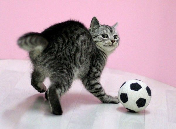 watch funny cat pictures(10 foto)