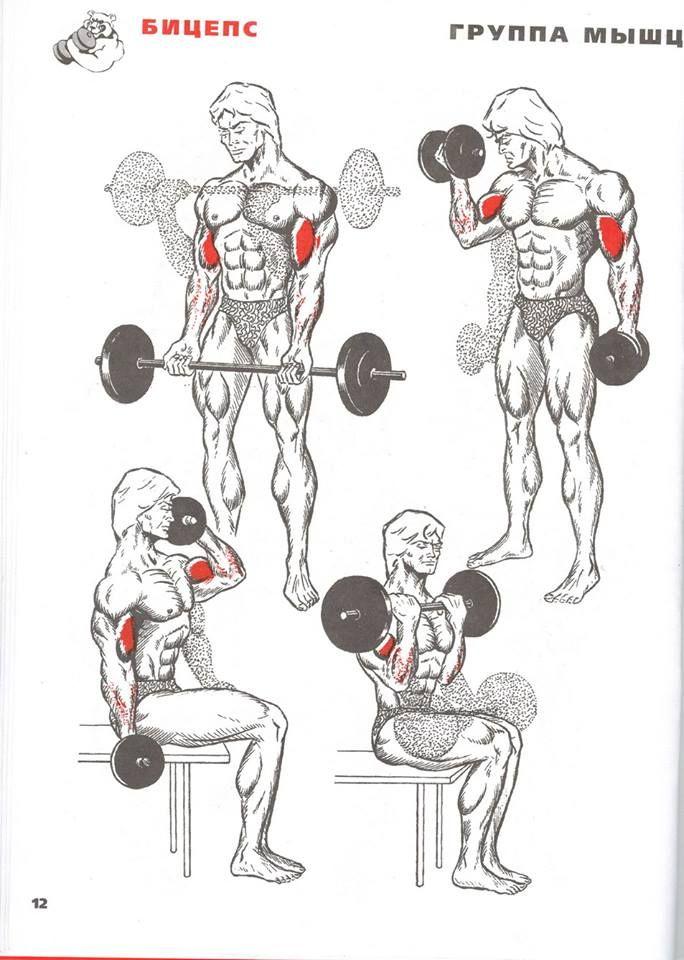 Упражнения для накачивания мышц в картинках