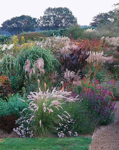266 best images about perennials that bloom all summer on for Hardy perennial ornamental grasses