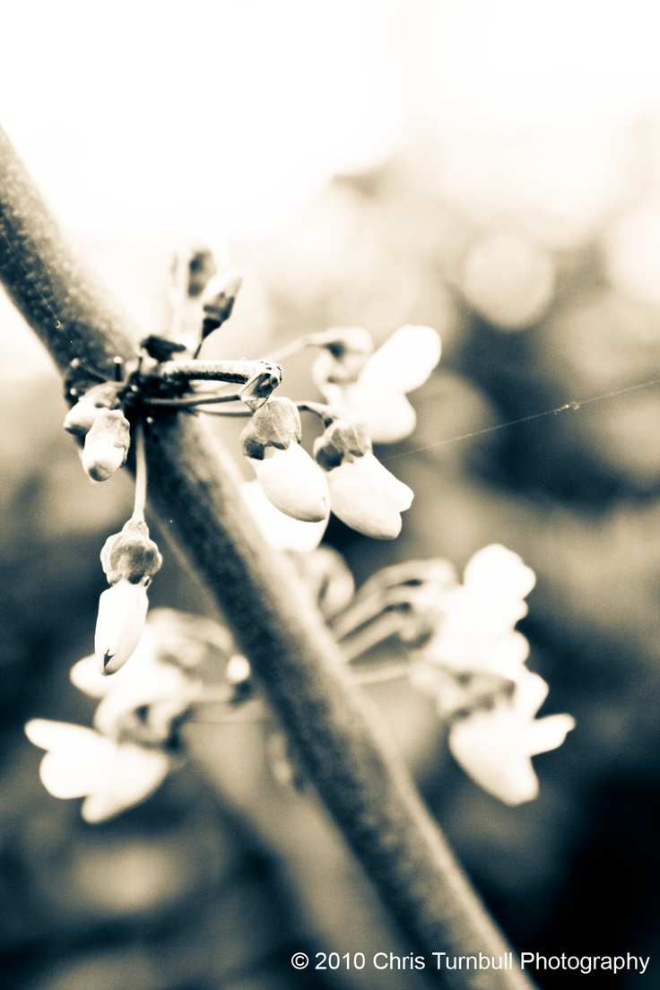Spring in Black and White!