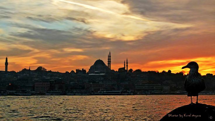 istanbul and seagulls by Erol Ayaz on 500px