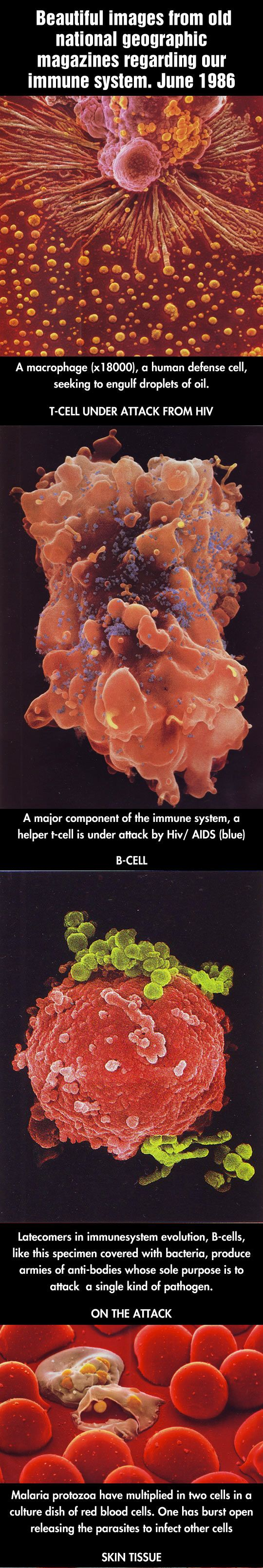 The Amazing Human Body (click for more pictures)