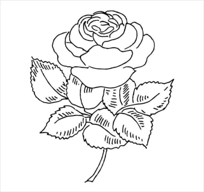 Pretty Rose Coloring Pages Free Coloring Pages Rose Coloring Pages Flower Coloring Pages