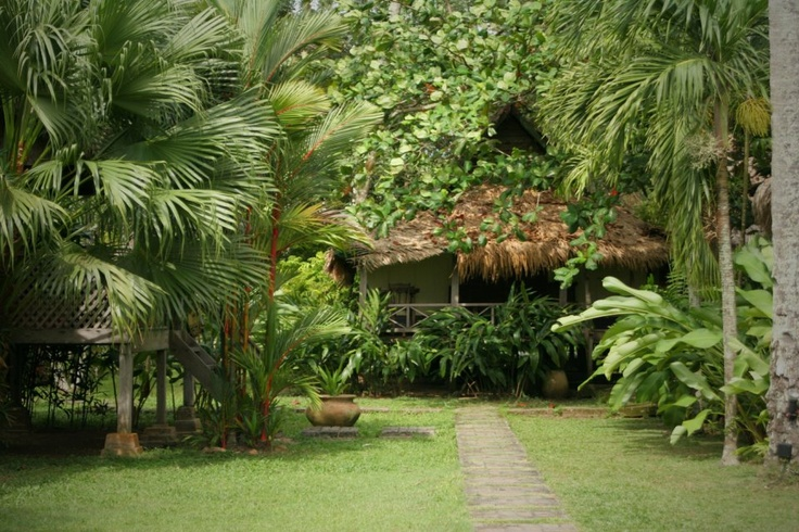 384 best images about jardin tropical on pinterest for Jardin tropical plantas
