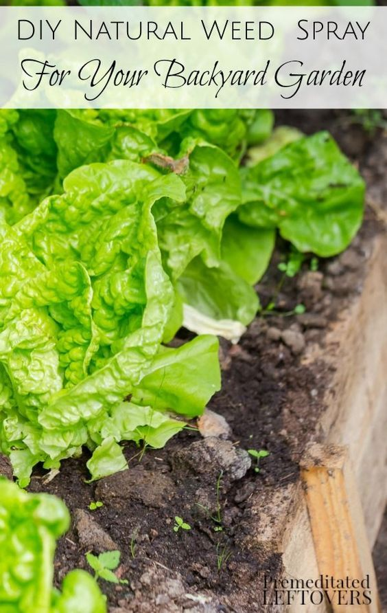 DIY Natural Weed Sprays for Your Backyard Garden