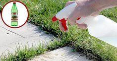 Bosszantó, ha a járda között kinő a fű vagy a gaz. De nem kell azonnal vegyszert használnunk!   Van egy nagyon egyszerű, és környezet kímélő módja…