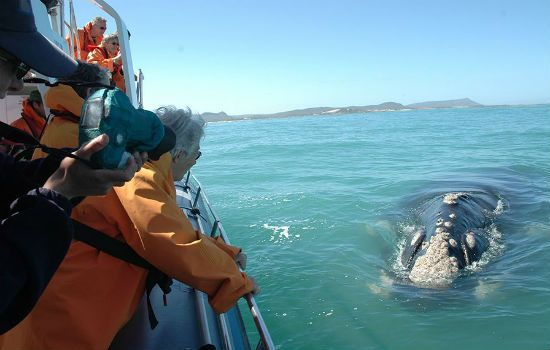 You can't get closer than this to see the amazing whales! #luxurycapetown