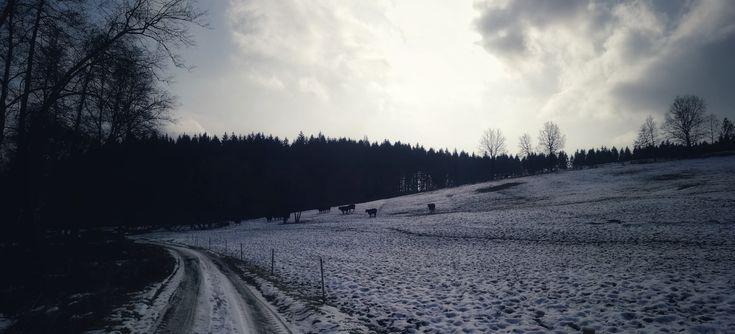 Winterday in nature