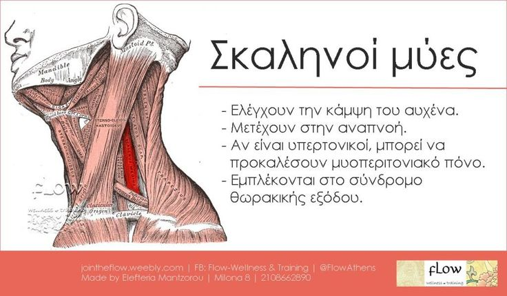 Σκαληνοί μύες