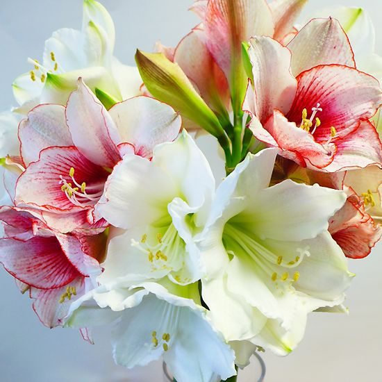 105 best images about bouquets aquarelle on pinterest for Fleurs amaryllis bouquet