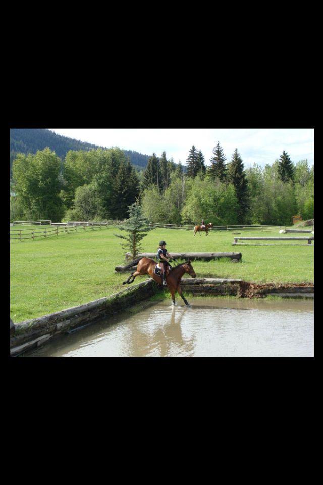 74 Best Saddle Pad Heaven Images On Pinterest Horse Tack