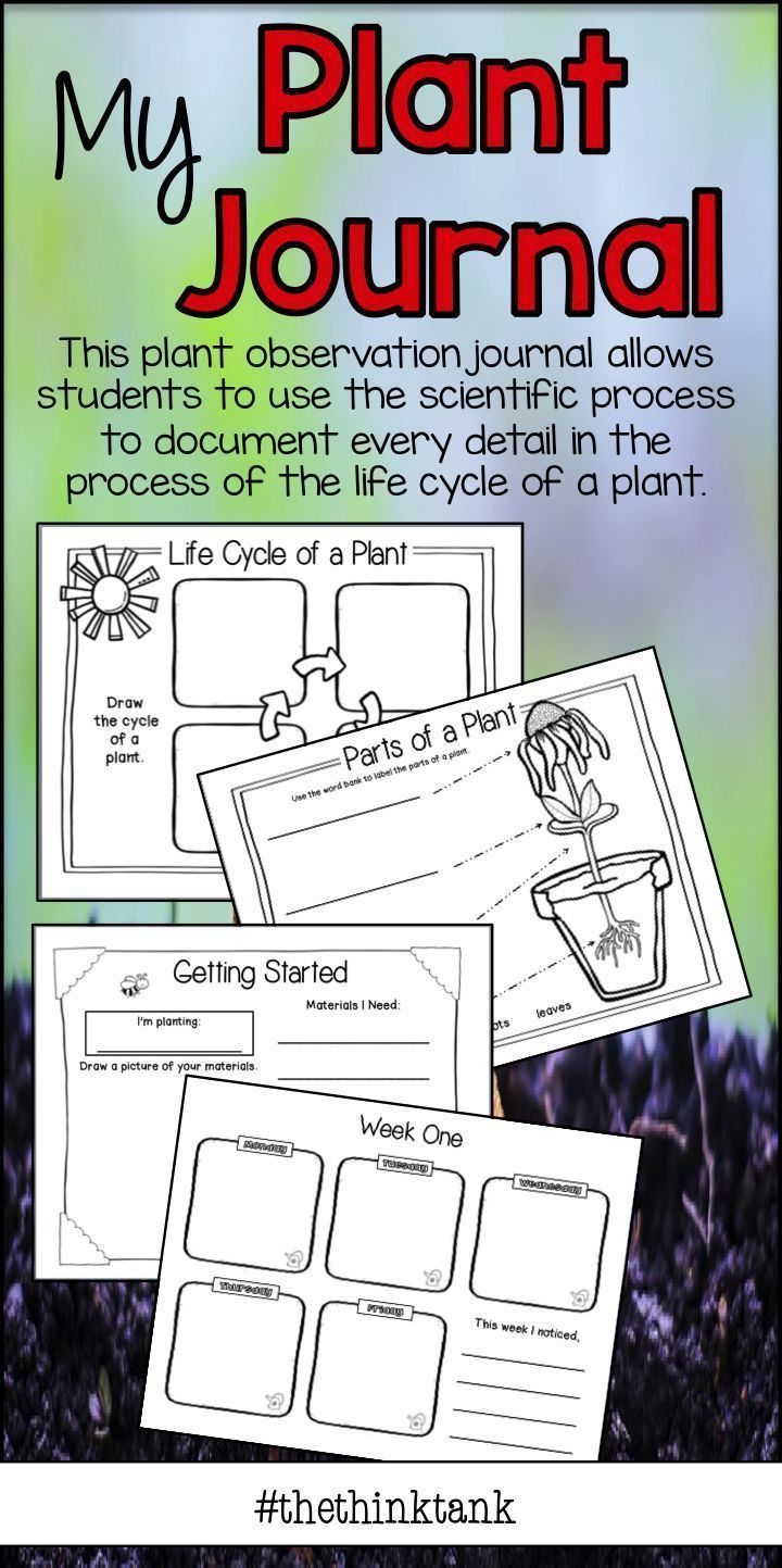 My Plant Journal The Life Cycle Of A Plant Plants Observation Journal Plant Life Cycle Life Cycles