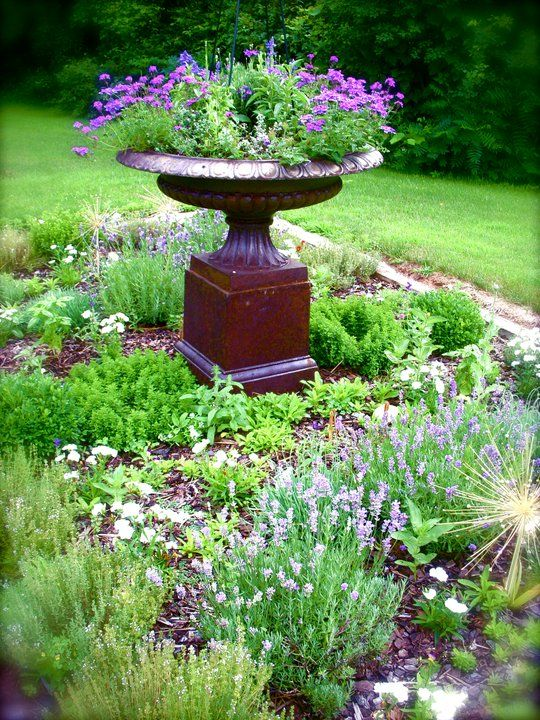 Simple herb garden with an urn as center piece - bird bath in summer, norfolk pine holder in winter?