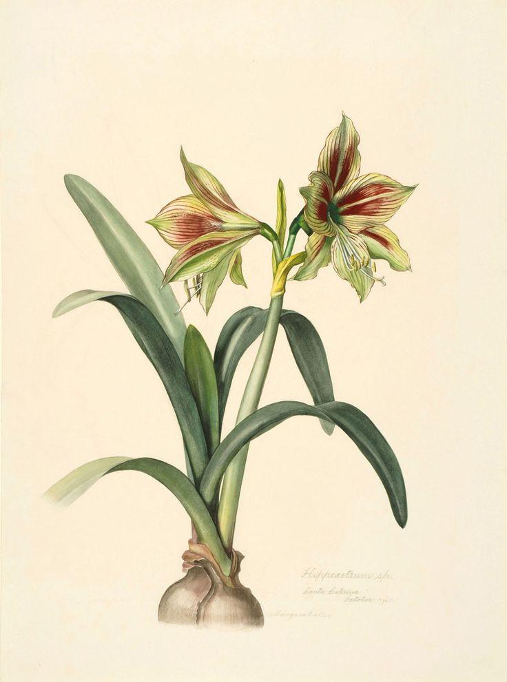Margaret Mee: A Flor da Lua | Primavera Garden Center