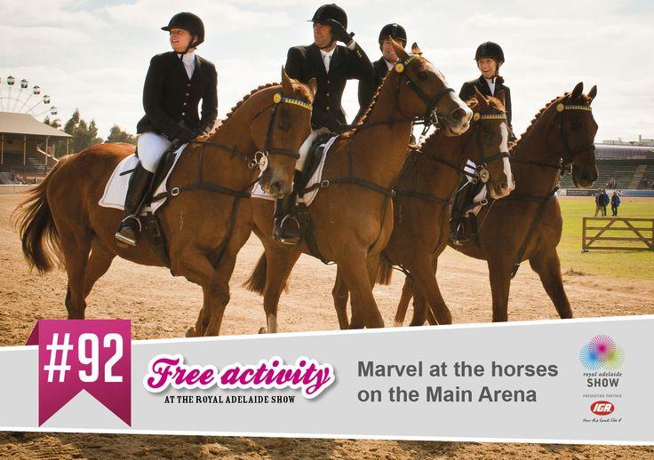 Beautiful horses! #AdelShow