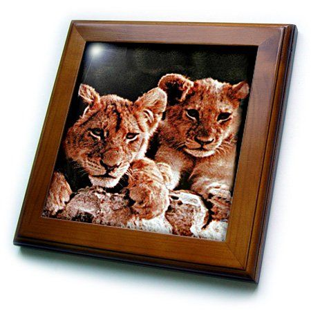 3dRose ft_600_1 African Lion Cubs Framed Tile, 8 by 8-Inch 3dRose http://www.amazon.com/dp/B000MBSGGM/ref=cm_sw_r_pi_dp_XjGOtb026RASZQ9W