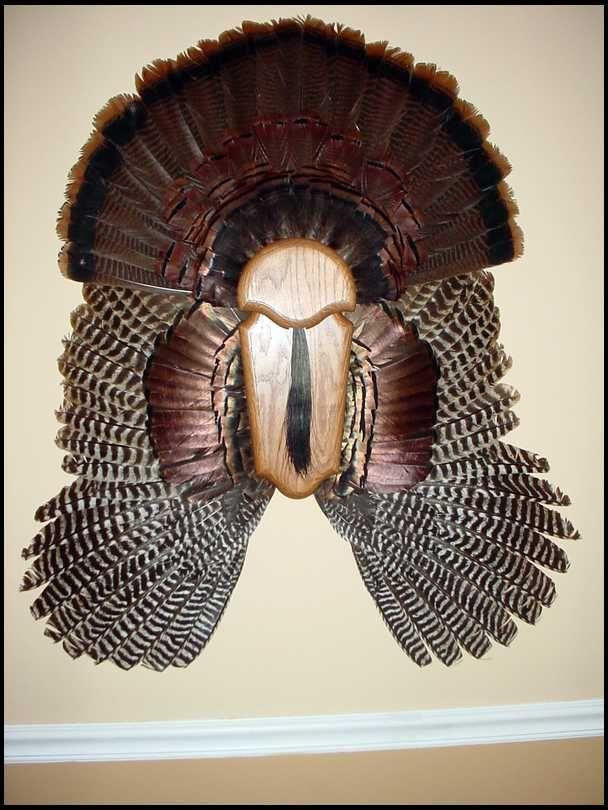Turkey Fan Mount On Wood Google Search Turkey Mounts