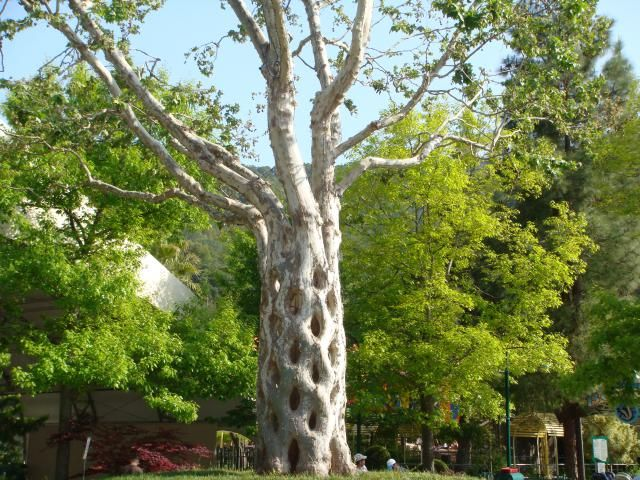 Gilroy Gardens is of the best California theme parks for kids - and a good place to take the grandparents too