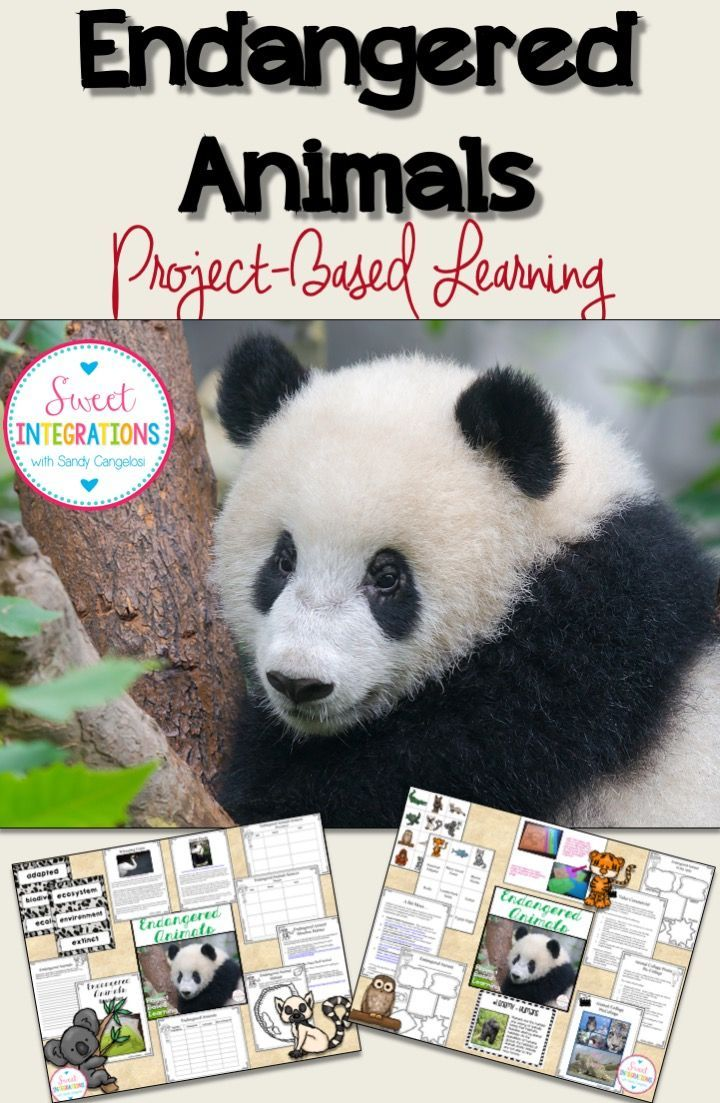 Endangered Animals: Project Based Learning; PowerPoint, Flipbook, Research and more; $